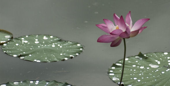 Mindfulness Meditation lotus